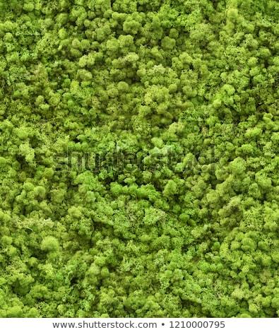 Trawy mech bezszwowy tekstury zielone wiosną Zdjęcia stock © tashatuvango