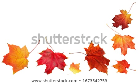 beautiful autumn leaves background template Stock photo © SArts