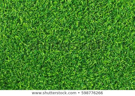Grama artificial textura pormenor abstrato verde Foto stock © boggy