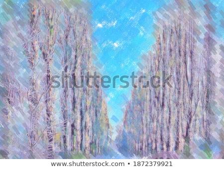 poplars in winter scene stock photo © lovleah