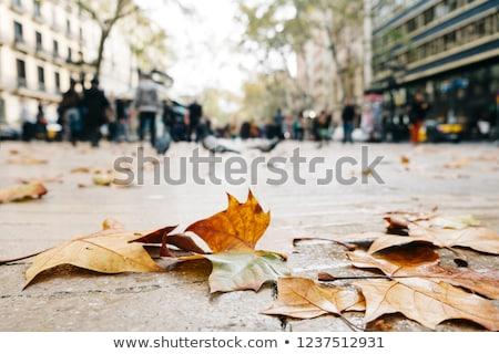 dry leaves on La Rambla in Barcelona, Spain Stock photo © nito