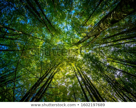 Forest in Pyrenees Stock photo © pedrosala