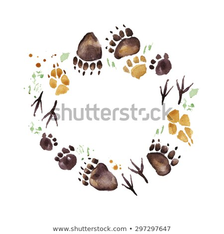 Grizzly medve kör szalag illusztráció absztrakt terv Stock fotó © bluering