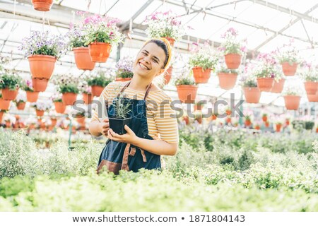 Stock photo: Contemporary young gardener taking care of potted flowers in greenhouse
