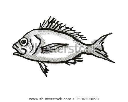 Western Orange Perch Australian Fish Cartoon Retro Drawing Stock photo © patrimonio