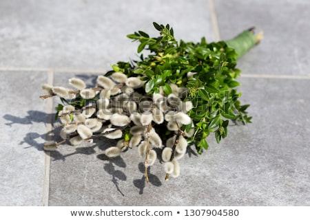 Pussy wierzba kamień Wielkanoc roślin Zdjęcia stock © dolgachov
