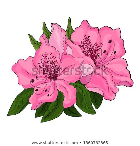Roze azalea bloem mooie Stockfoto © simply