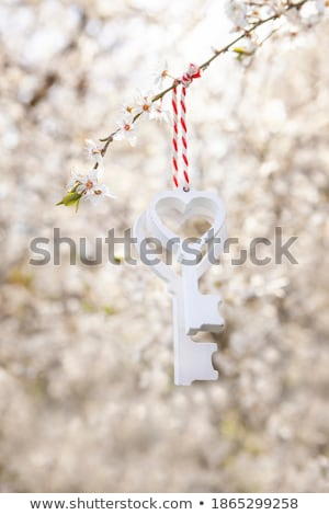 two keys on the tree branch stock photo © srnr