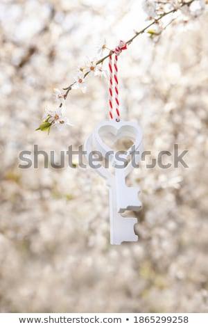 honingbij · oogst · stuifmeel · boom · bloem - stockfoto © srnr