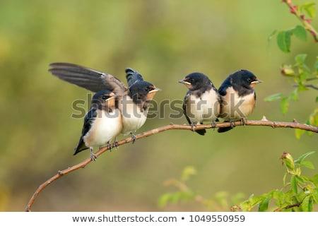 Vliegen baby vogel creatieve ontwerp kunst Stockfoto © indiwarm