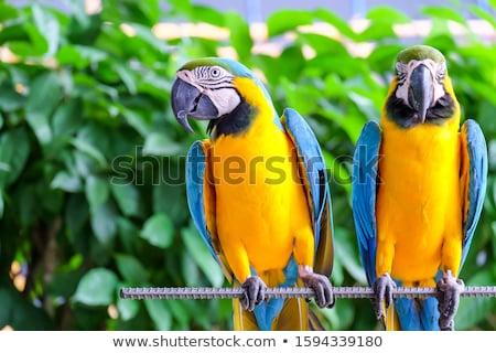 Bonitinho papagaio criador projeto arte Foto stock © indiwarm
