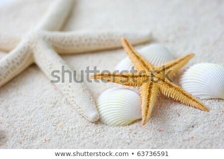 песок каменные морем снарядов песчаный пляж белый Сток-фото © calvste