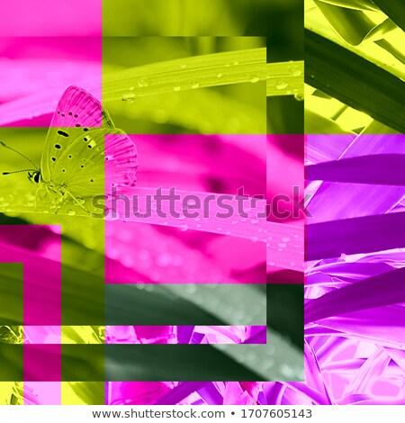 Kelebek kolaj yedi farklı kelebekler çiçek Stok fotoğraf © vlad_podkhlebnik