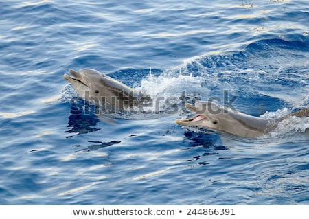 trained dolphin Stock photo © Witthaya