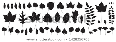 Autumn foliage, maple and ivy leaves Stock photo © Bertl123