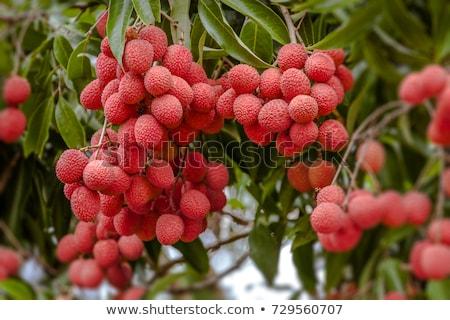 Taze meyve olgun lezzetli Stok fotoğraf © Lekchangply