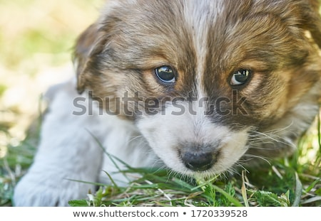 chien · photo · dame · ouvrir · air - photo stock © pressmaster