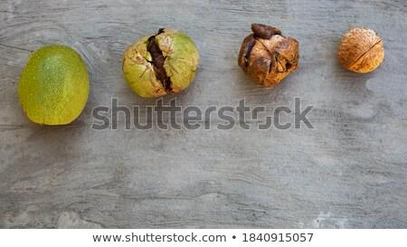 Groupuscule vert blanche feuille groupe Photo stock © kaczor58