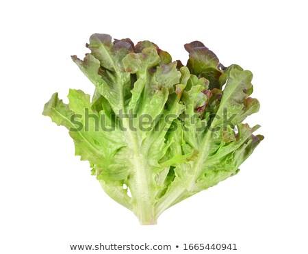 Fresco alface pronto salada comida Foto stock © alex_grichenko