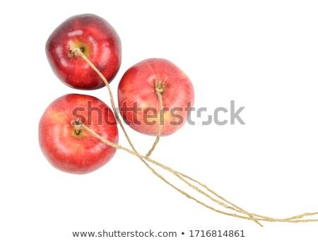 pomme · chaîne · suspendu · Palm · saine · délicieux - photo stock © reicaden