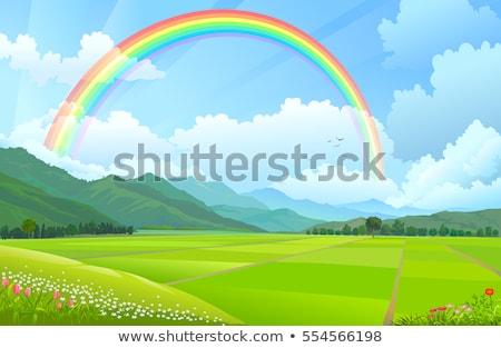 arrozal · grama · verde · blue · sky · nuvem · nublado · paisagem - foto stock © pzaxe