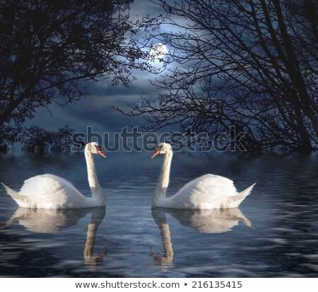 лебедя · девушки · свет · луна · озеро - Сток-фото © nizhava1956