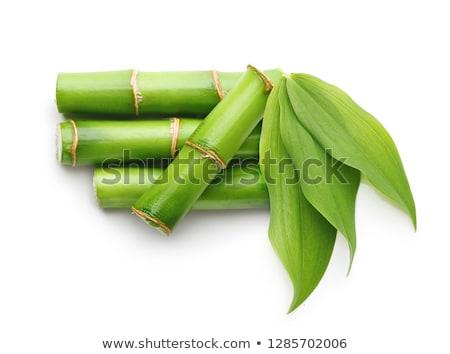 緑 竹 白 コピースペース 春 森林 ストックフォト © Nobilior
