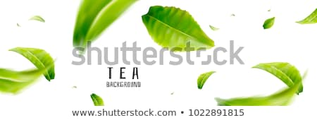 Fly On Leaf Stock photo © cosma