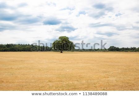 field with dry grass near forest Stock photo © alex_grichenko
