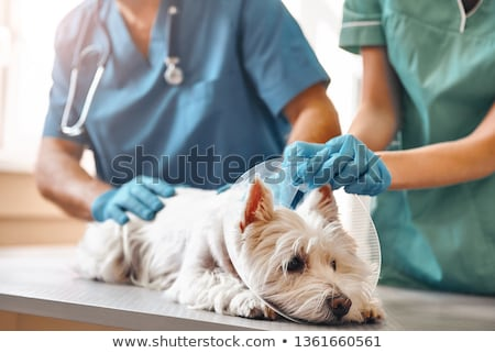 On the table by the veterinarian Stock photo © ivonnewierink