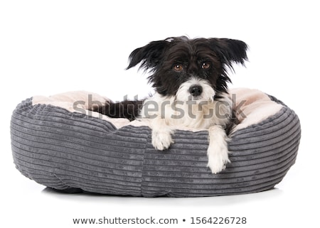 Pet bed. Isolated stock photo © karammiri