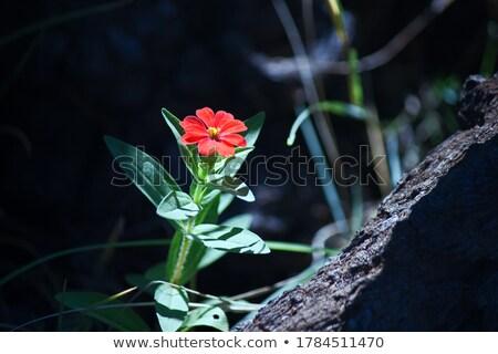 kayalar · çiçek · büyüyen · doğa · yaz · yeşil - stok fotoğraf © Lio22