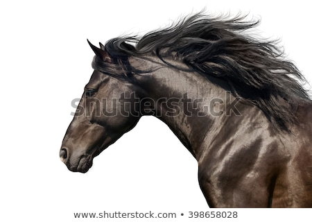Horse head isolated on a white background. Stock photo © g215