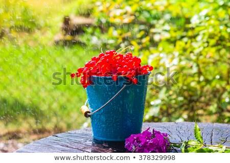 красный смородина фрукты ковша лет дождь Сток-фото © fotoaloja