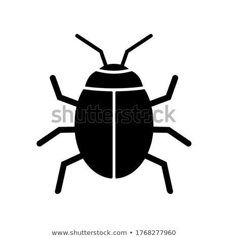 Nero scarabeo ritratto studio bella insetto Foto d'archivio © t3rmiit