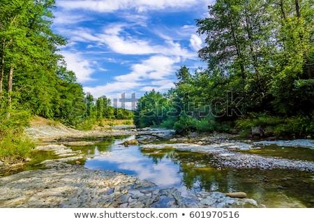tájkép · erdő · folyó · nagy · kövek · part - stock fotó © OleksandrO