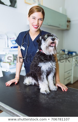 Zdjęcia stock: Uśmiechnięty · weterynarz · szczeniak · biały · kobieta