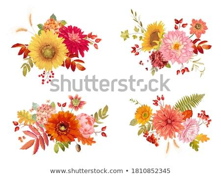 vector watercolor autumn berries stock photo © artibelka