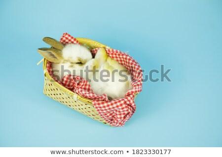 Fehér albínó nyúl kosár húsvét nyuszi Stock fotó © Photoline