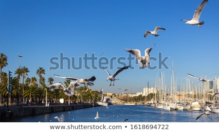 Seagull with view over Barcelona Stock photo © artjazz
