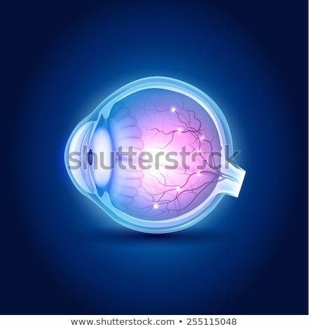 anatómia · szem · gyönyörű · kék · terv · férfi - stock fotó © tefi