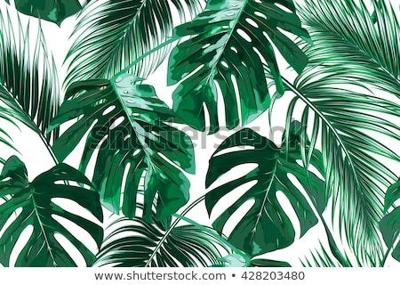 Stock fotó: Trópusi · pálmalevelek · vektor · végtelenített · trópusi · pálma