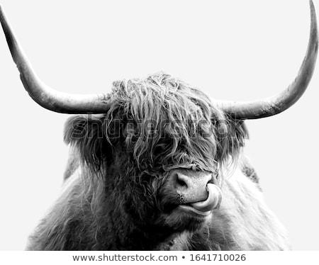 Aranyos tehén fehér illusztráció boldog természet Stock fotó © bluering