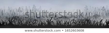 vector fairytale silhouettes Stock photo © naum
