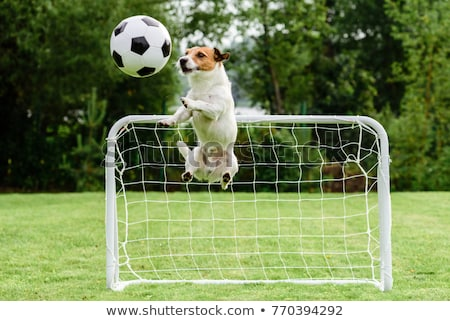Dog soccer player and ball Stock photo © orensila
