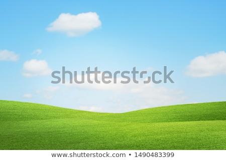 Stock fotó: Vad · fű · kék · ég · természetes · virágzó · égbolt