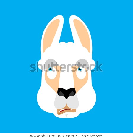 Lama Alpaca was confused emotions face avatar. Animal is perplex Stock photo © popaukropa