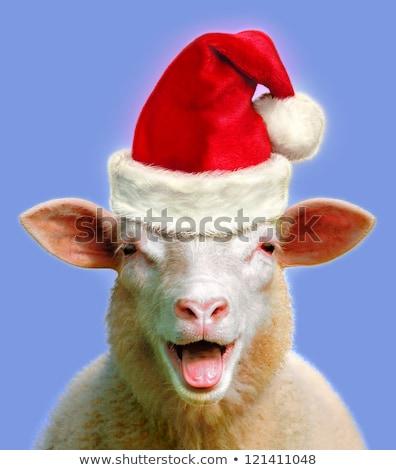 Drôle moutons Noël illustration paysage neige Photo stock © adrenalina