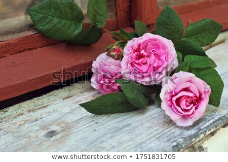 Bouquet of beautiful roses on a windowsill with text flowers Stock photo © m_pavlov