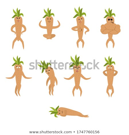 Mandrake root isolated. Legendary mystical plant in form of man. Stock photo © popaukropa